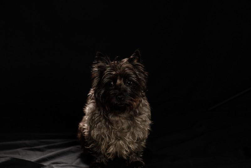 DoggoPortrait-31