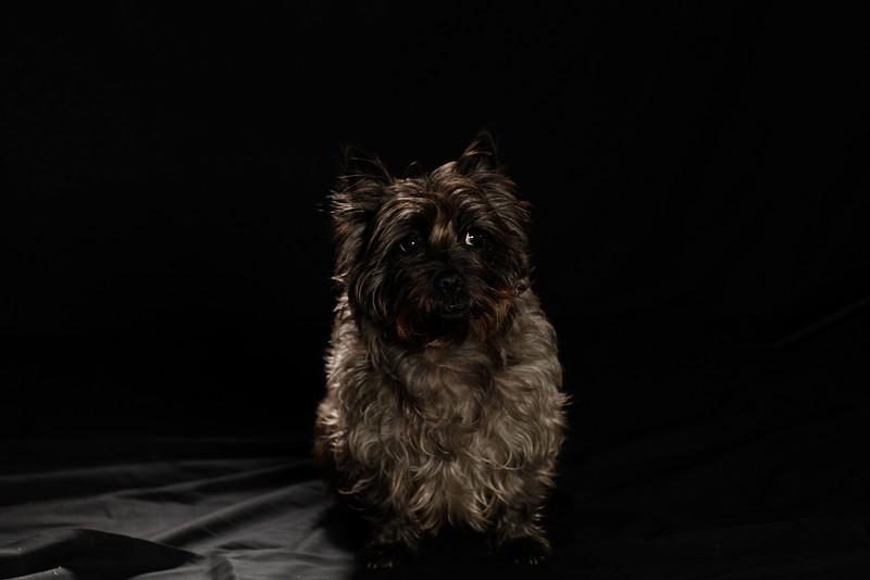 DoggoPortrait-28