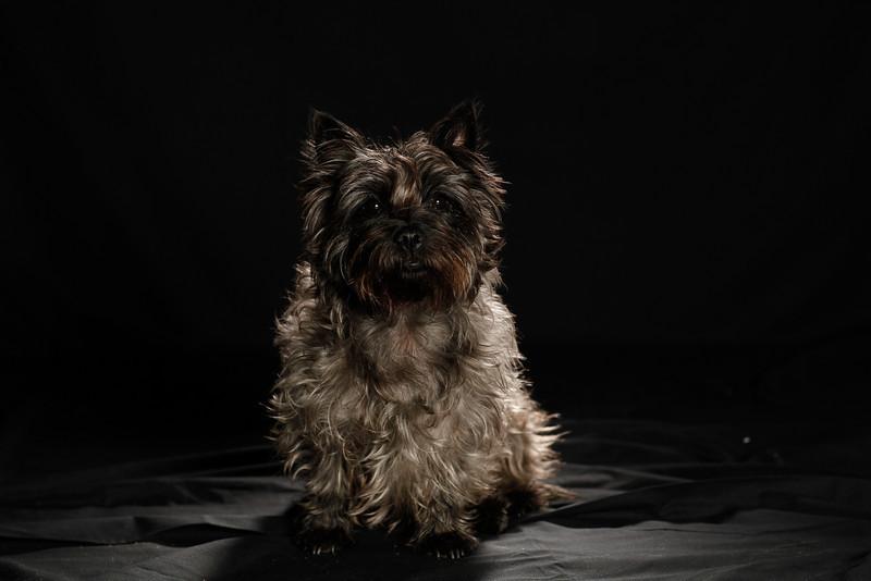 DoggoPortrait-60