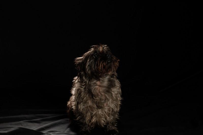 DoggoPortrait-23