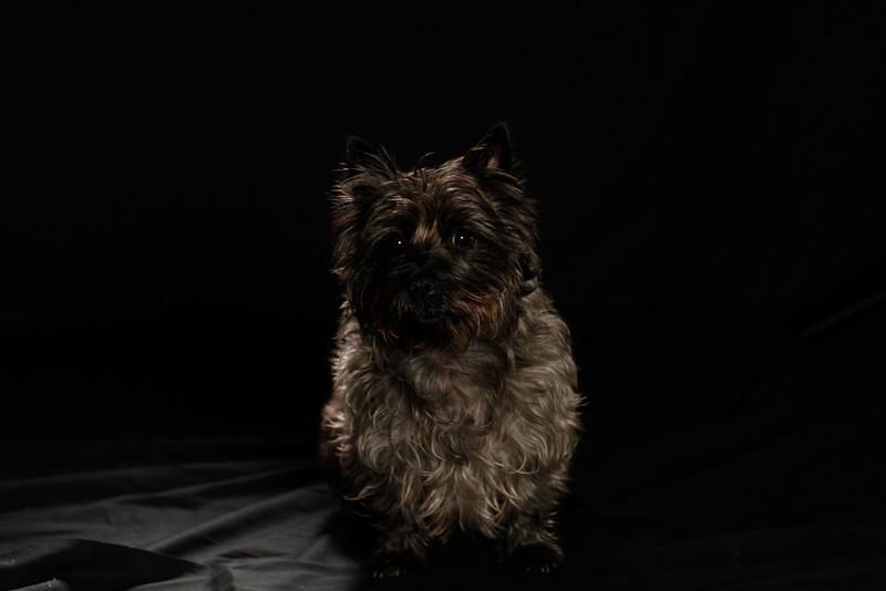DoggoPortrait-27