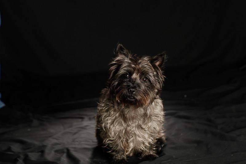 DoggoPortrait-46