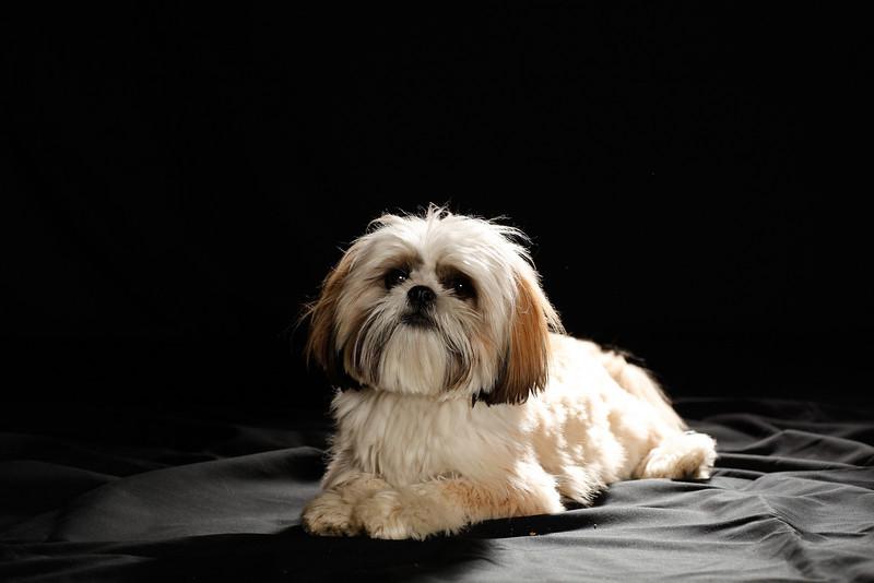 DoggoPortrait-9