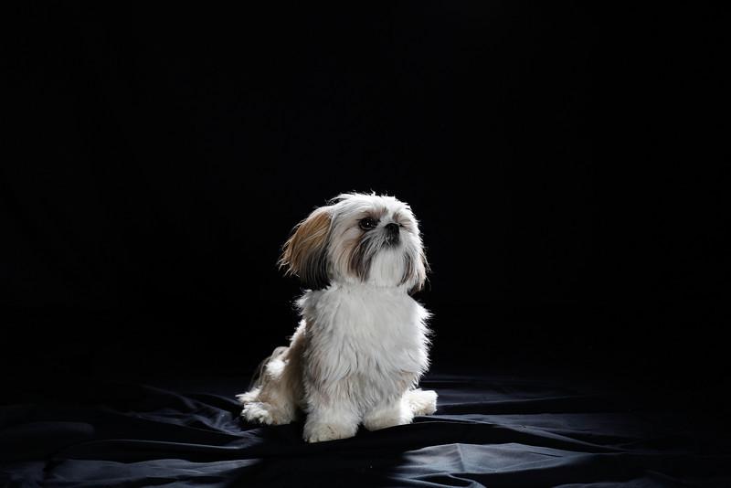 DoggoPortrait