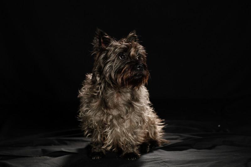 DoggoPortrait-57