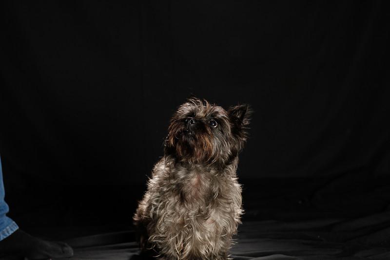 DoggoPortrait-35