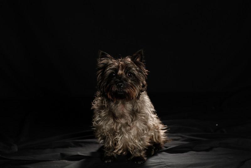 DoggoPortrait-50