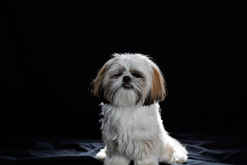 DoggoPortrait-7