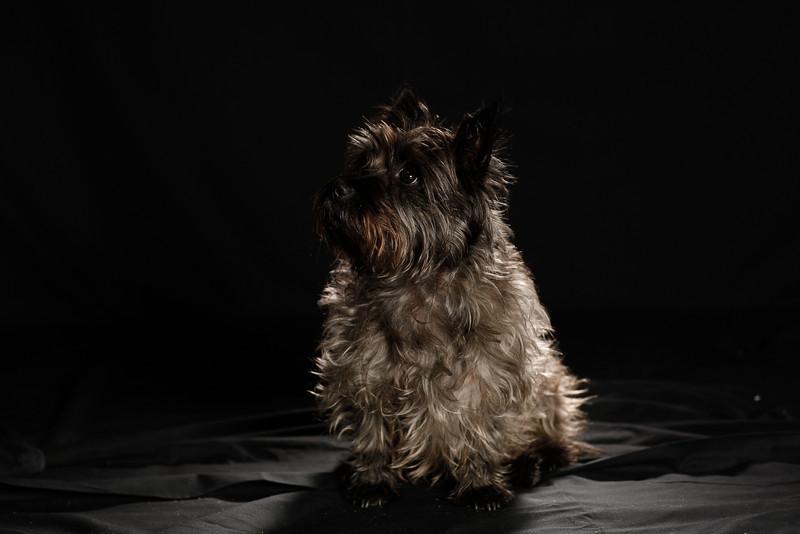 DoggoPortrait-61