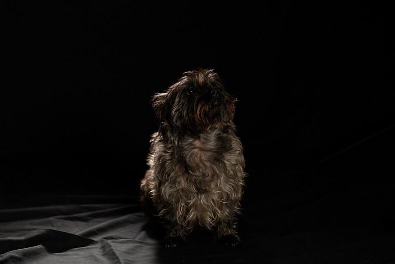 DoggoPortrait-24