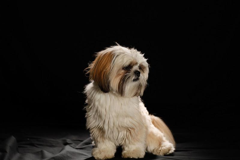 DoggoPortrait-11