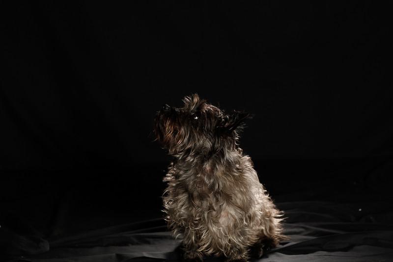 DoggoPortrait-53