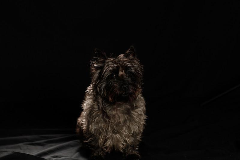 DoggoPortrait-33
