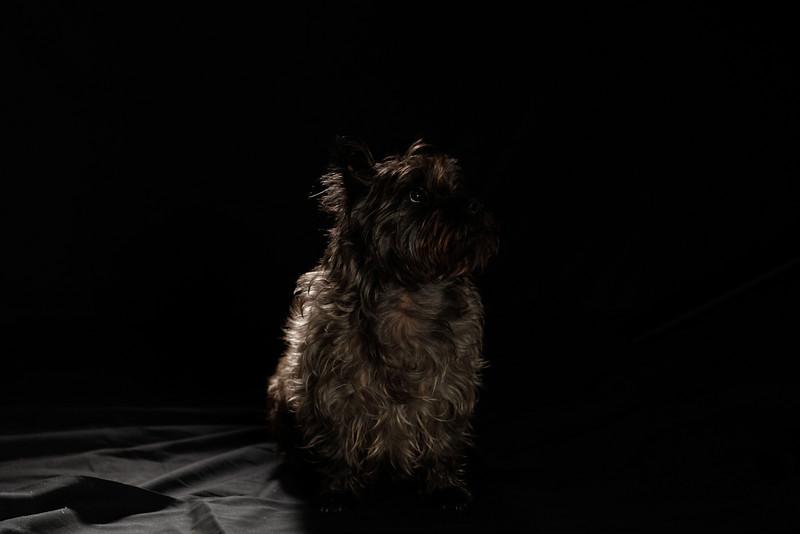 DoggoPortrait-25