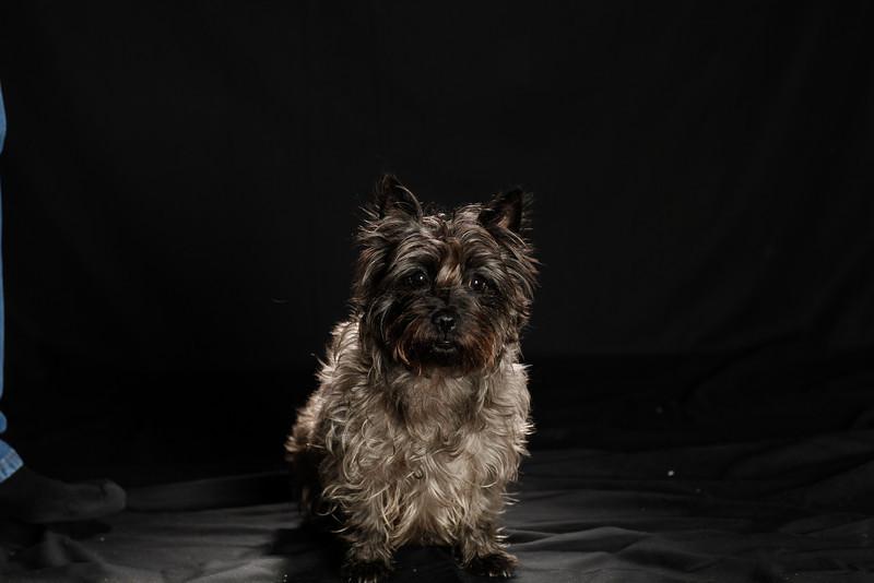 DoggoPortrait-36