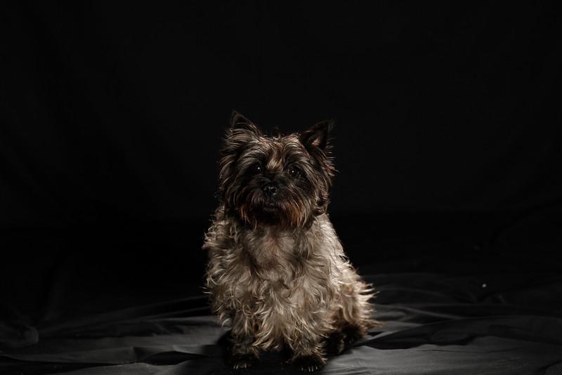 DoggoPortrait-51