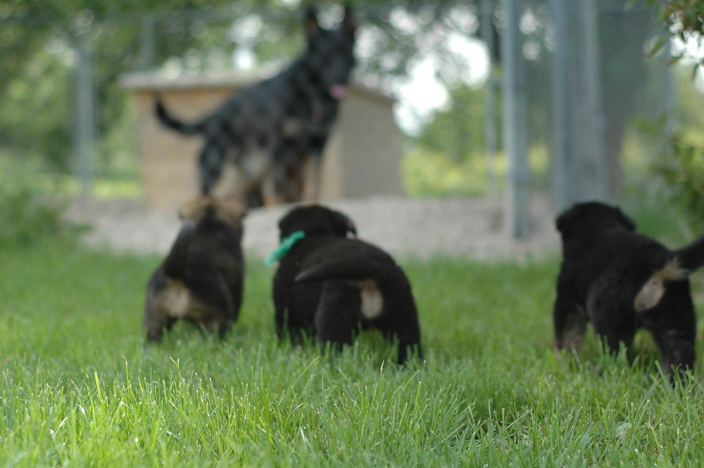 no collar girl, green collar boy and yellow collar girl (and Quinn)<br /> 4wks