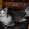 Iseo & Izabal