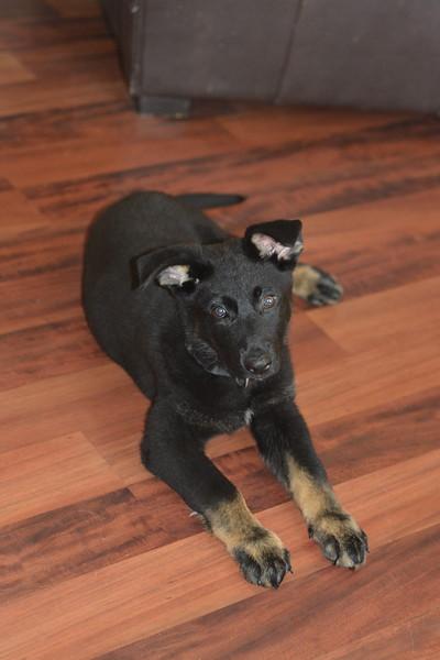Yulie (purple), 9 weeks old