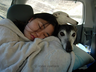 Rachel naps while Sadie rests her chin on Rachel's pillow as we drive through southern Utah (photo taken by Gayle)