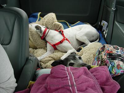 Sadie and Katie rest as we drive through Utah