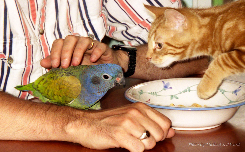Who say cats and birds hate each other.