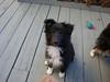 camera hound!