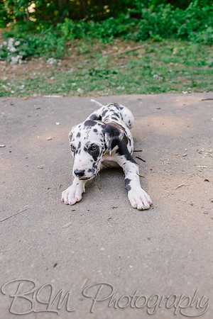Zion-Hill-Danes-0460_06-12-17  by Brianna Morrissey  ©BLM Photography 2017