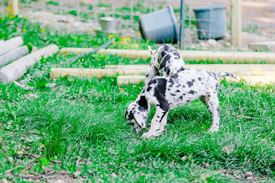 Zion-Hill-Danes-0318_06-12-17  by Brianna Morrissey  ©BLM Photography 2017