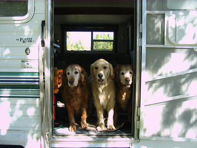 Have RV will travel! Buddy (R) Zoe (C) Nigel (L)