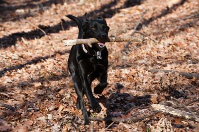 Zoë with stick