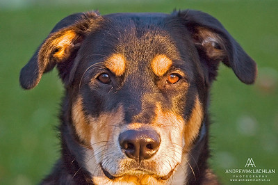 Mixed Breed Portrait