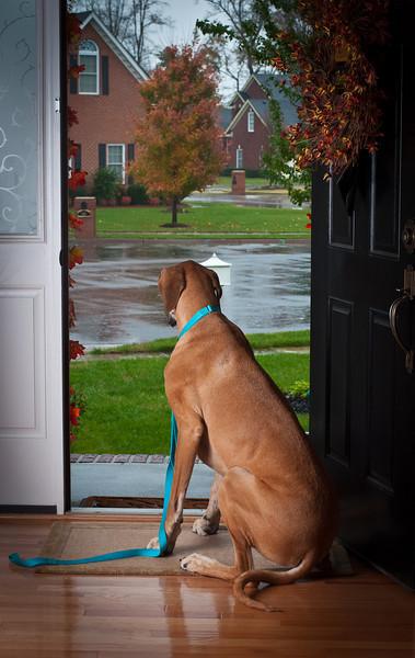 Rainy Day Bailey