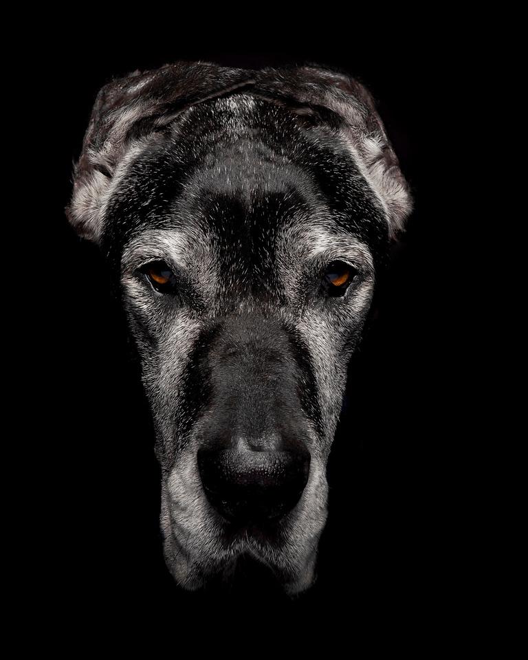 Doggy Headshots