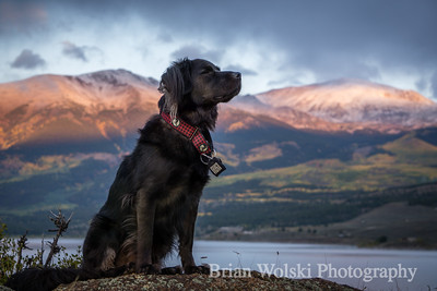 Black Dog in Colorado Mountains