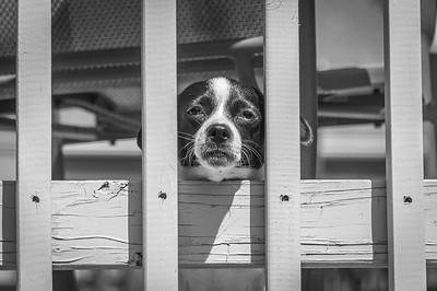 Daisy thinks she's behind bars.