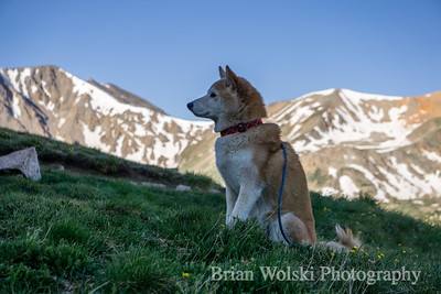 Shiba Inu In The Mountains