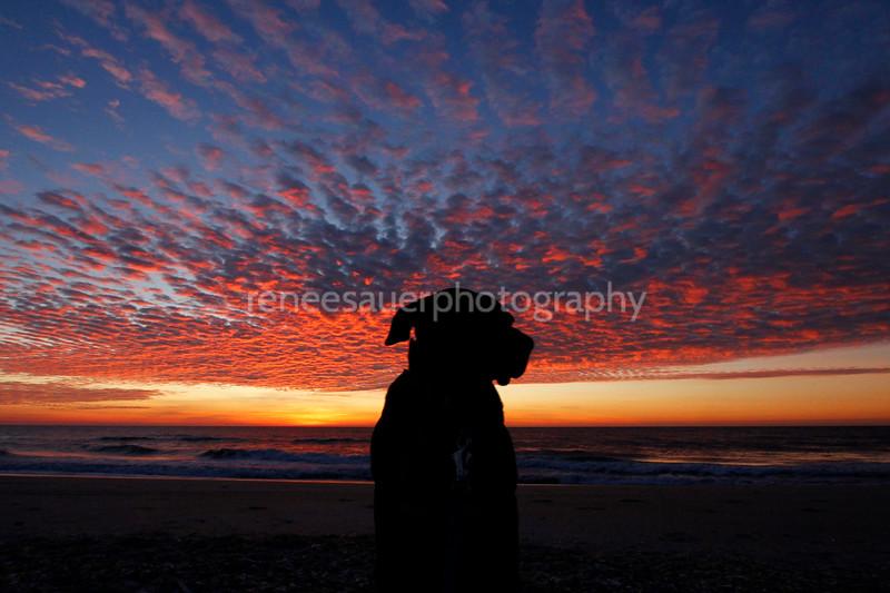 shazam otto sunrise site.jpg