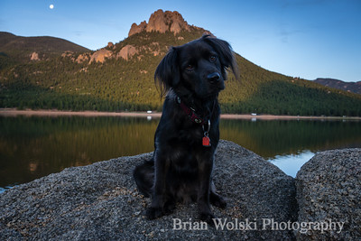 Dog at Wellington Lake, Colorado.