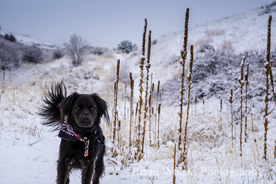 Black Dog In The Snow