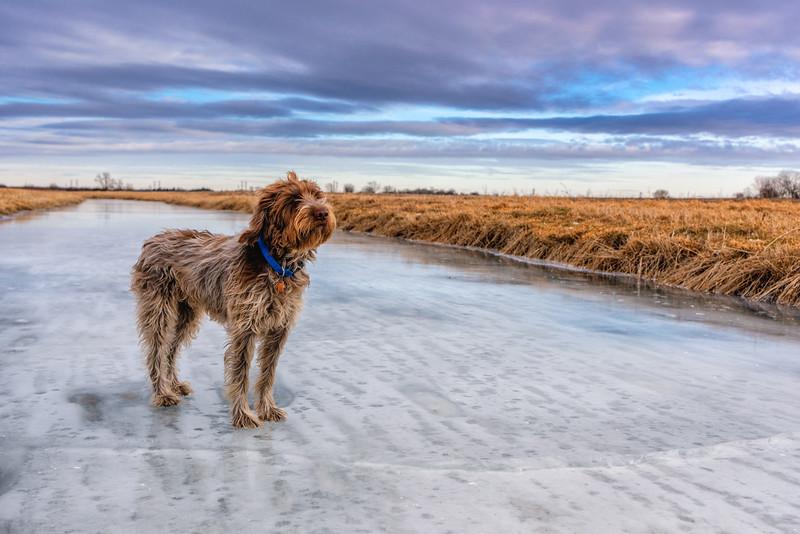 Posed on Ice