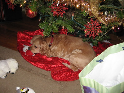 I'm the best present under the tree.