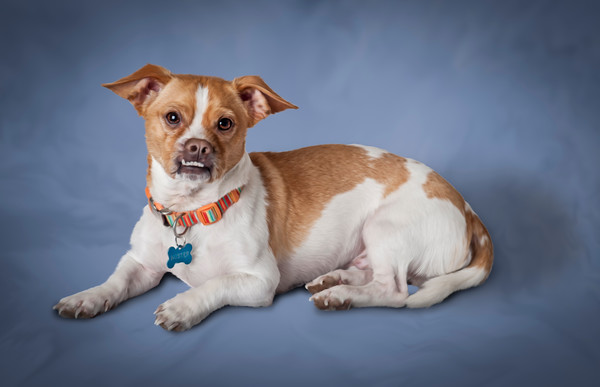 Pet-Portraits-CC_LB_Photography-14
