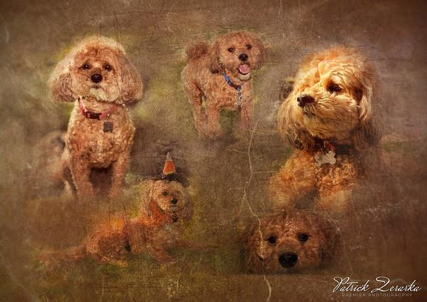 Pets Artistic Photo Montage
