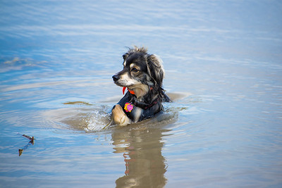 Perched up Water Dog