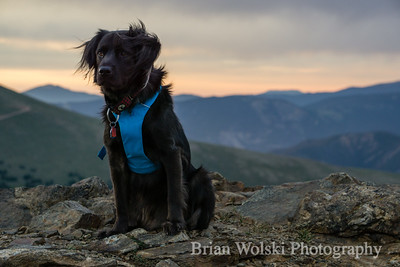 Black Dog on Mountain Summit