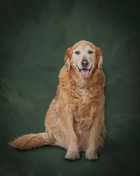 Pet-Portraits-CC_LB_Photography-15