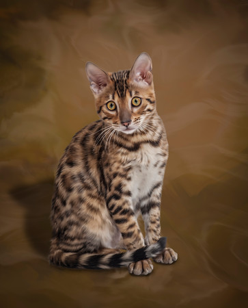 Pet-Portraits-CC_LB_Photography-6