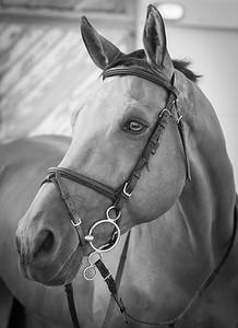 Prince Charming ... Al Ain ... UAE