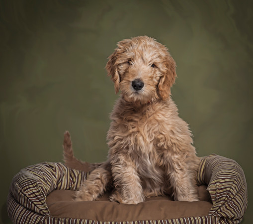 Pet-Portraits-CC_LB_Photography-8